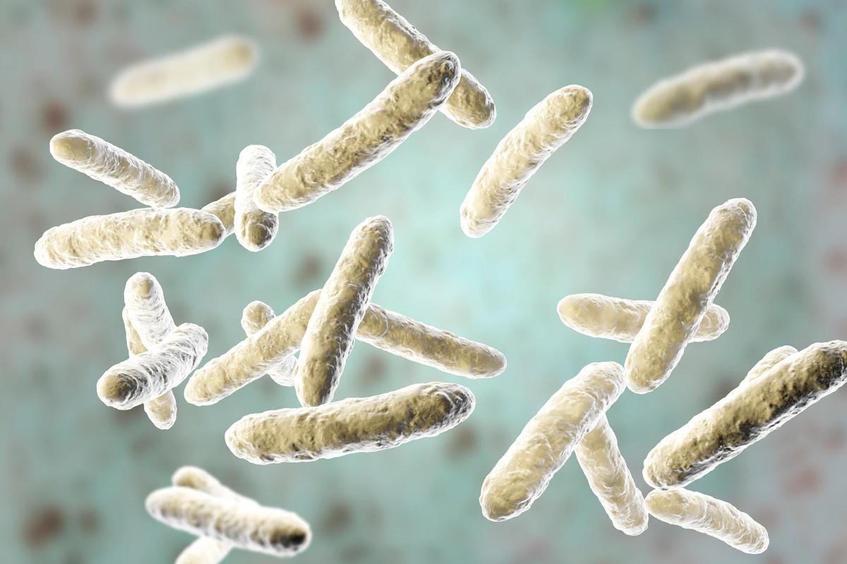 Maturazione del Microbiota fattori esteri che potrebbero portare conseguenze negative in età adulta